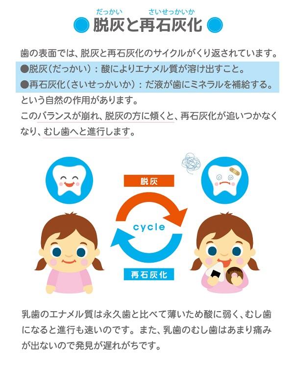 脱灰と 再石灰化。歯の表面では脱灰と再石灰化のサイクルがくり返されています。脱灰(だっかい)酸によりエナメル質が溶け出すこと。再石灰化(さいせっかいか)だ液が歯にミネラルを補給する。とう自然の作用があります。このバランスが崩れ、脱灰の方に傾くと、再石灰化が追いつかなくなり、むし歯へと進行します。乳歯のエナメル質は永久歯と比べて薄いため酸に弱く、むし歯になると進行も速いのです。また、乳歯のむし歯はあまり痛みが出ないので発見が遅れがちです。